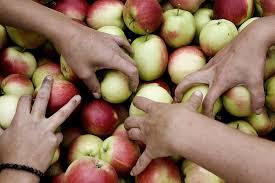 Børnehænder og æbler